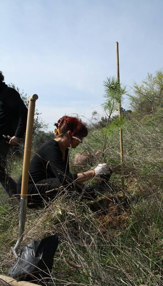 casa per le arti uomo piantava alberi è ora di piantarla 1 SUA MAESTÀ LALBERO