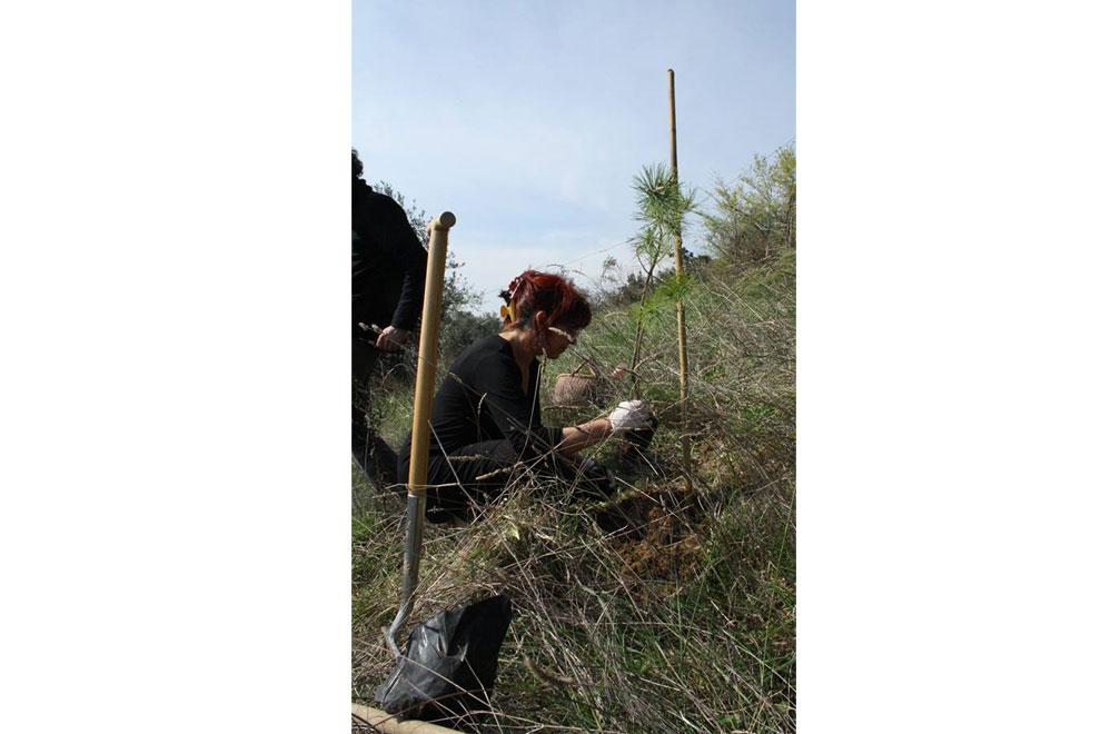 casa per le arti uomo piantava alberi è ora di piantarla 11 è ora di piantarli è ora di piantarli alberi