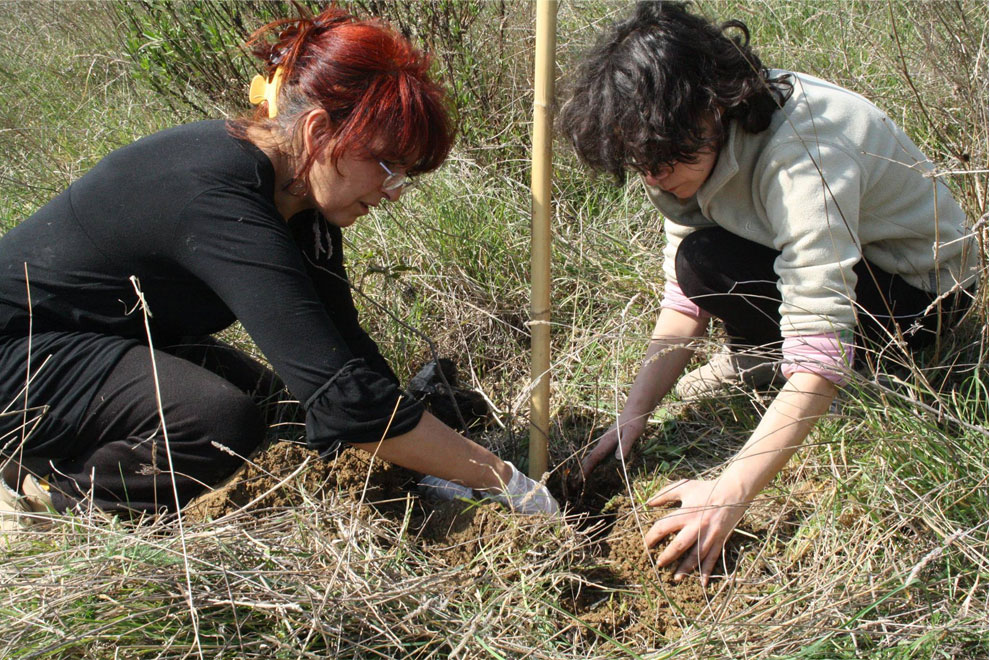casa per le arti uomo piantava alberi è ora di piantarla 21 è ora di piantarli è ora di piantarli alberi