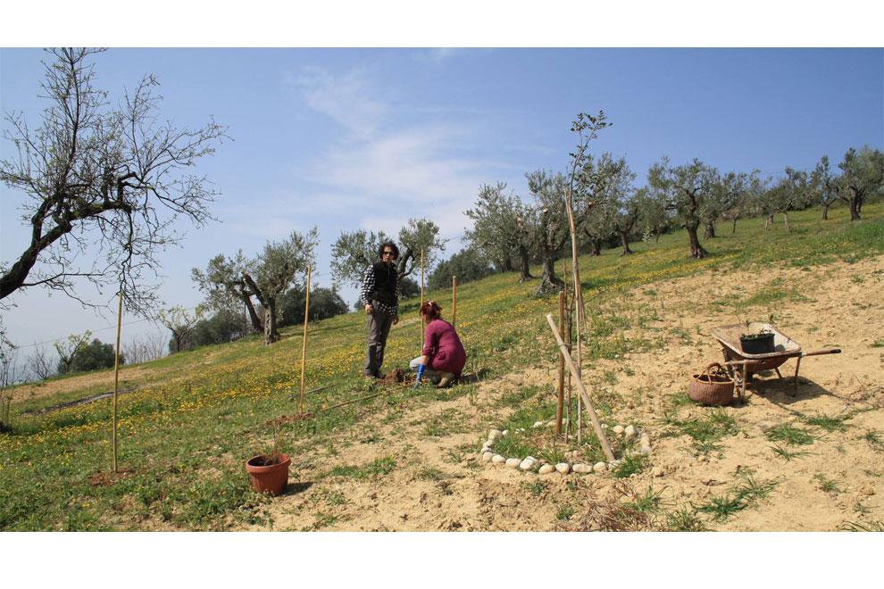 casa per le arti uomo piantava alberi è ora di piantarla 51 è ora di piantarli è ora di piantarli alberi