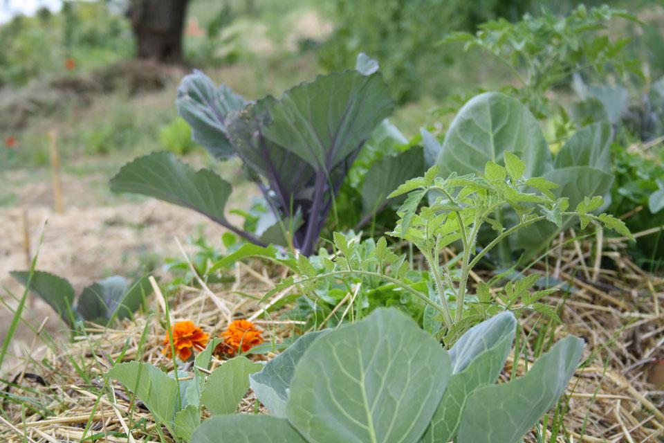 8 Agricoltura