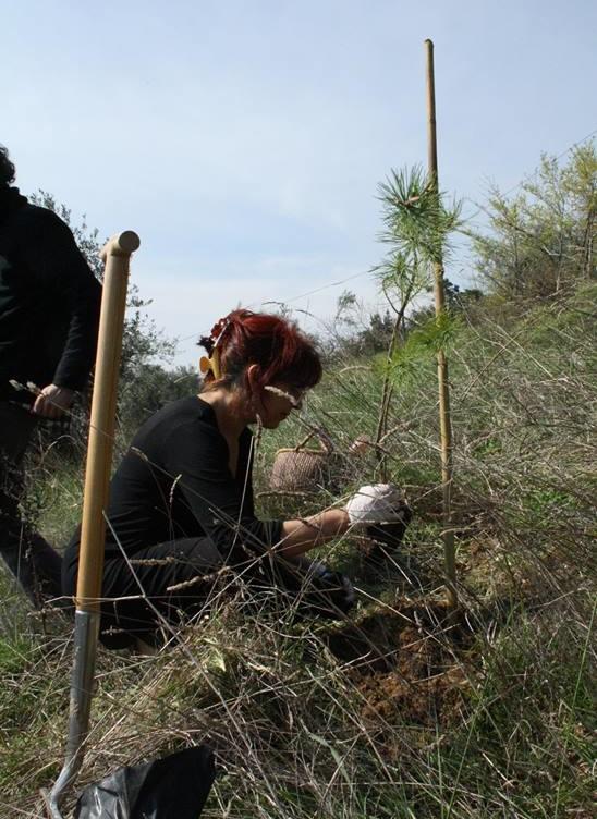 """L'associazione culturale La Casa per le Arti aderisce al progetto """" E' ora di piantarli - La grande sfida"""" promossa dall'associazione culturale L'uomo che pianta gli alberi"""